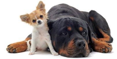 addestramento-del-cane