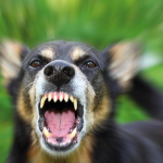 comportamento aggressivo del cane