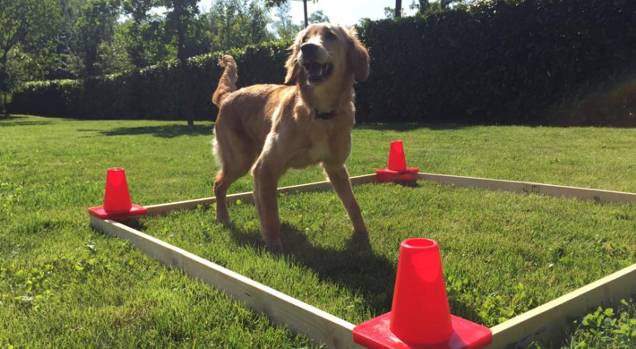 corso-avanzato-cani