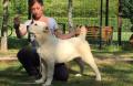 corsi handler per cani da bellezza