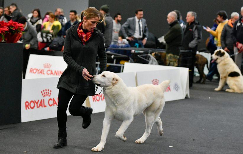 corso handler cani