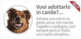 consulenza per l'adozione di un cane