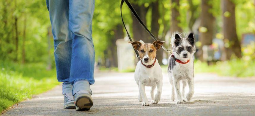 Servizio di Dog Sitter